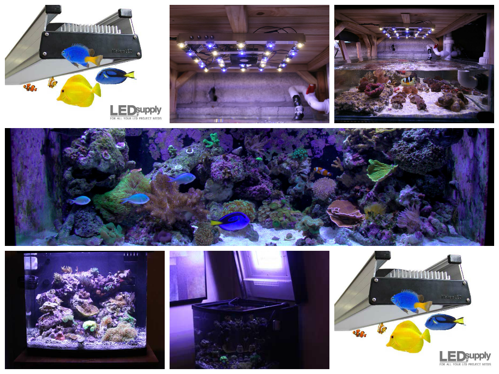 High Power LEDs in Reef Tank Lighting
