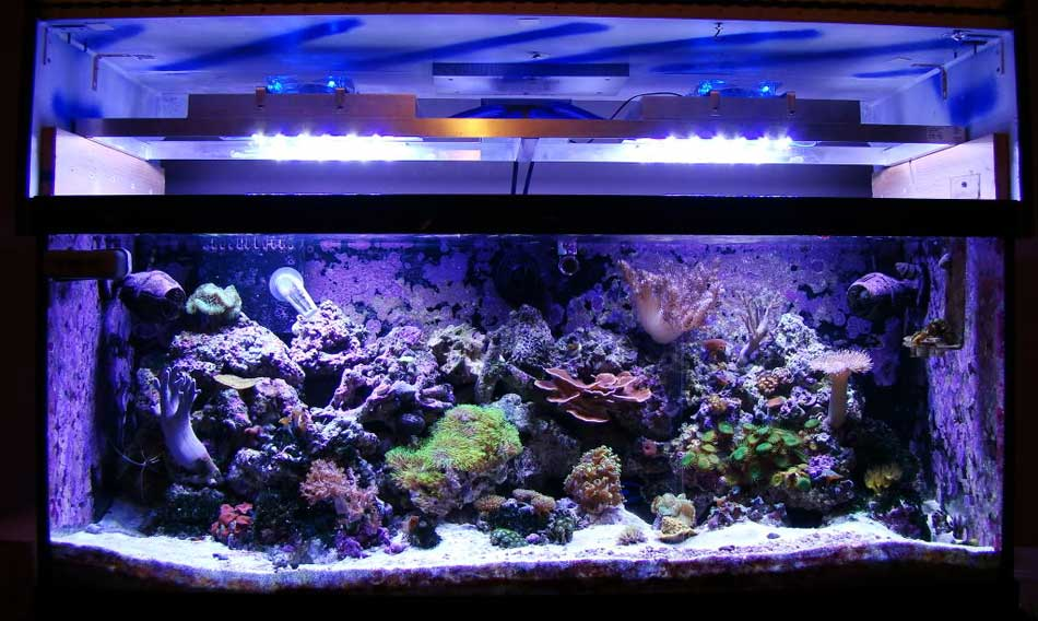 Led Aquarium Lighting Reviews