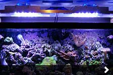 4-Foot Reef Tank Light