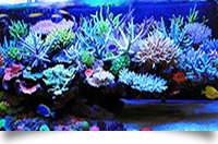 LED Reef Tank Light